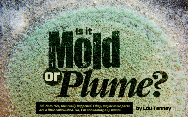 Is it Plume or Mold?