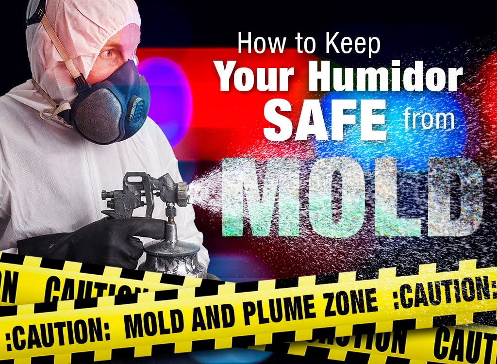 How to Keep Your Cigars Safe from Humidor Mold