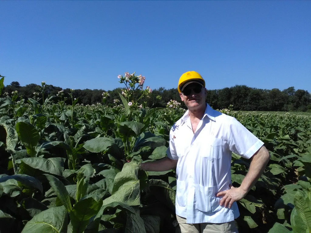 altadis broadleaf wrapper tour in the tobacco field 6
