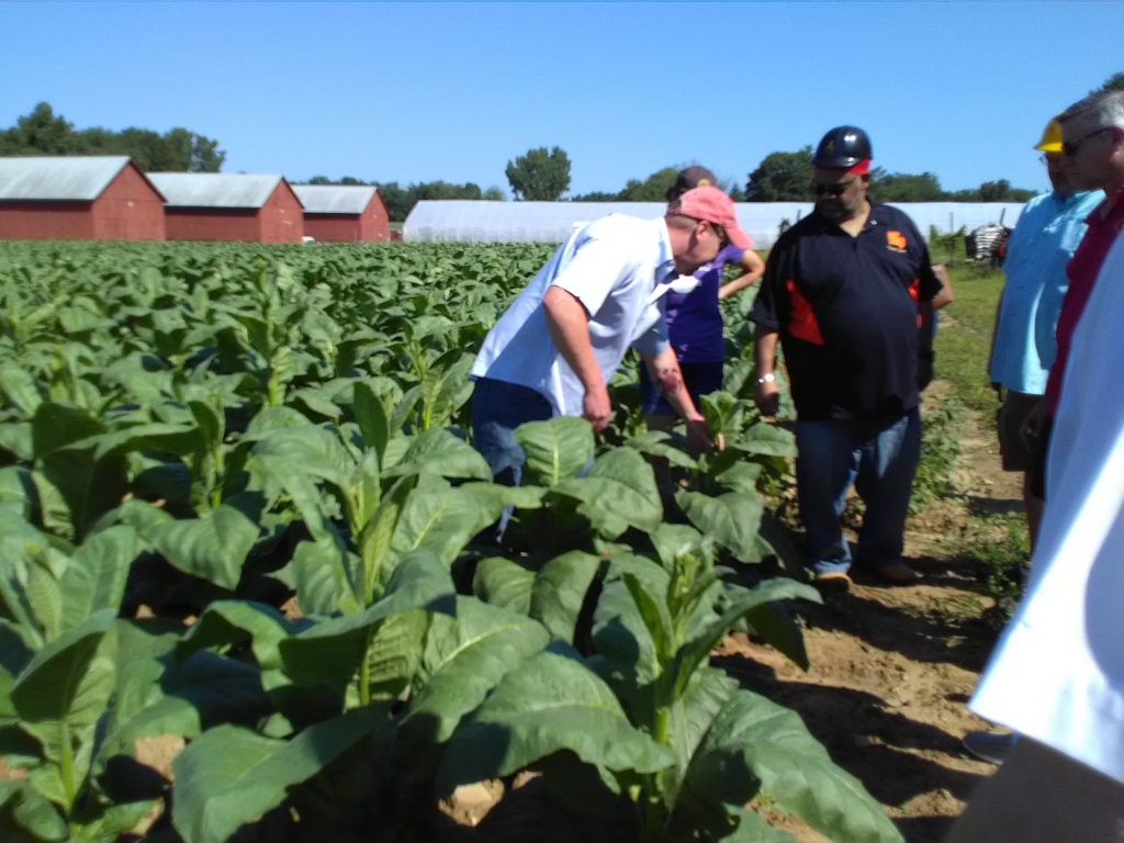 altadis broadleaf wrapper tour in the tobacco field 7
