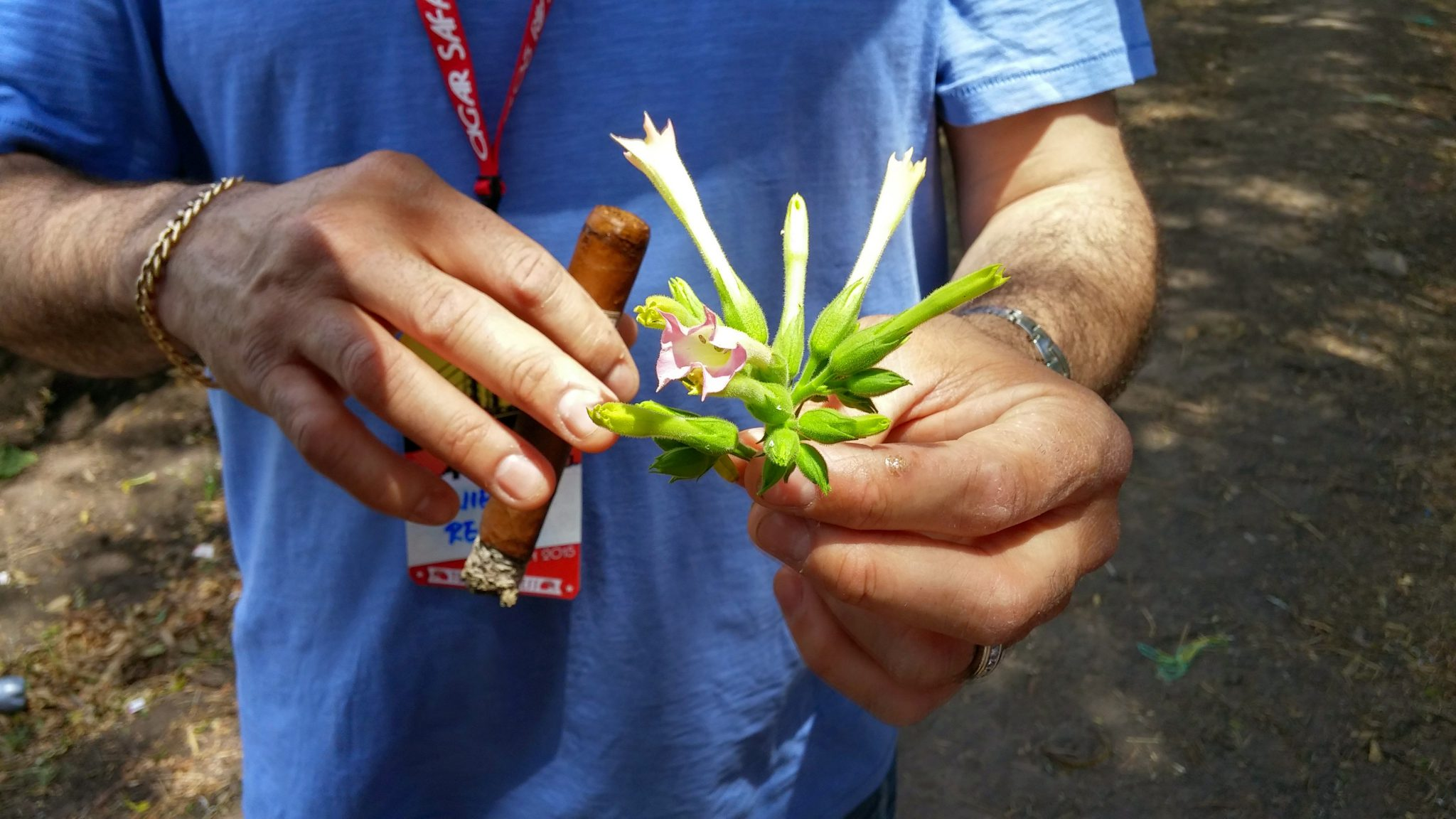 5 things about maduro cigars topped tobacco flowers