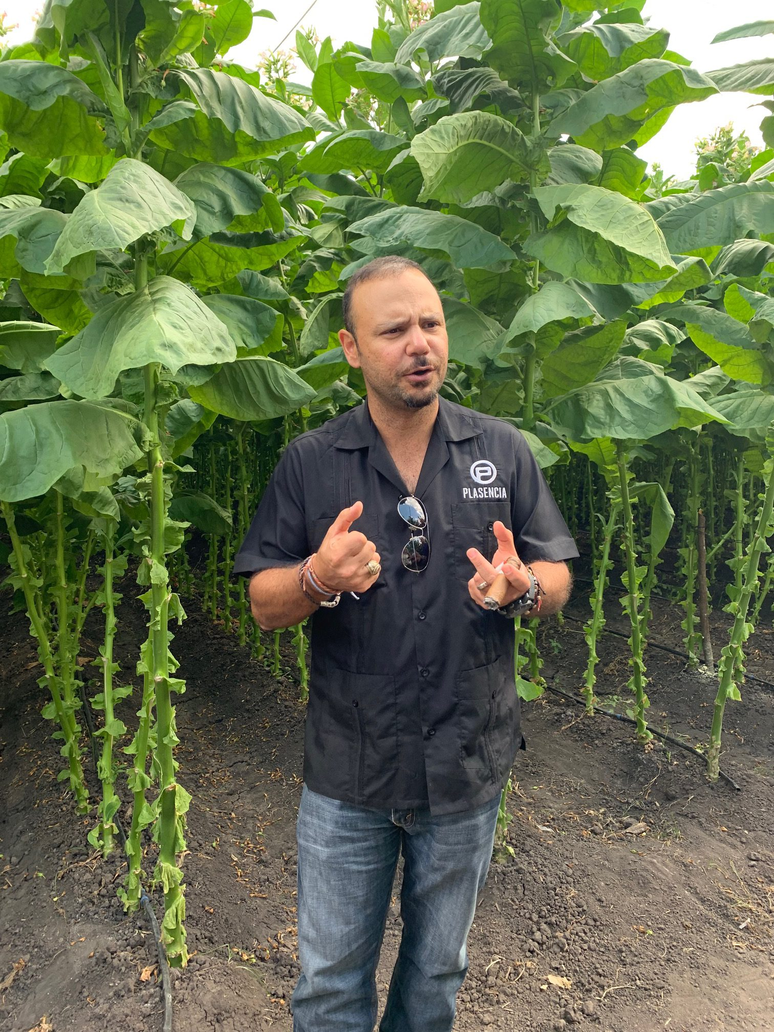 master blenders podcast interview nestor plasencia jr tobacco field image