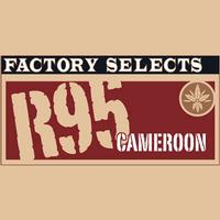 Rocky Patel Factory Selects R95